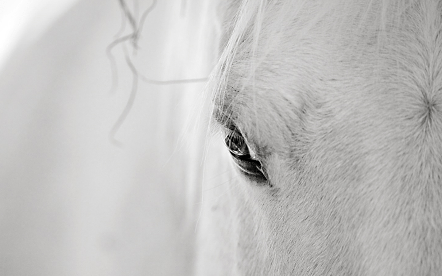 Lullaby of the Horse